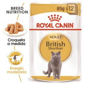 Royal Canin British Shorthair, comida húmeda para gatos