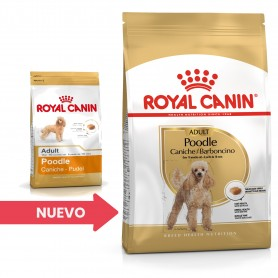 Royal Canin Poodle - Caniche