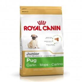 Royal Canin Pug Junior - Carlino Junior