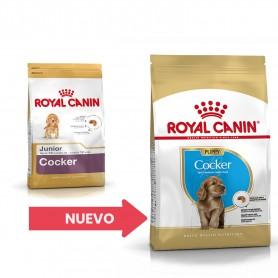 Royal Canin Cocker Junior