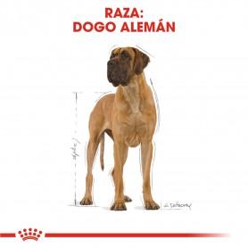Royal Canin Gran Danés