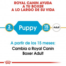 Royal Canin Puppy Boxer