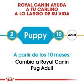 Royal Canin Puppy Pug - Carlino