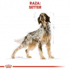 Royal Canin Setter