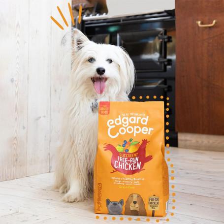 Correa tipo cuerda para perros estilo vintage