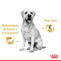 Arnés antitirones para perros