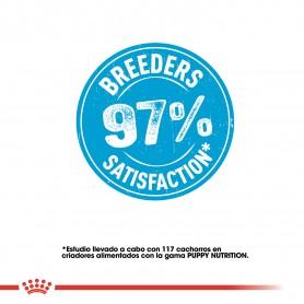 Pienso Royal Canin ofrece un 97% de satisfacción