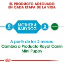 Pienso Royal Canin Mini Starter brinda los mejores nutrientes