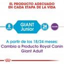Pienso Royal Canin Giant Junior para tu peludito