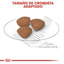 Croquetas Royal Canin Mini Junior
