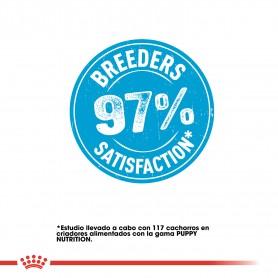 Pienso Royal Canin Mini ofrece un 97% de satisfacción