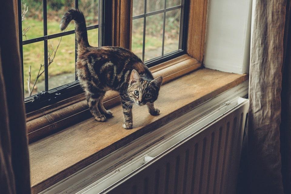 Gato marcando ventana con orina